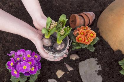 sadzenie-kwiaty
