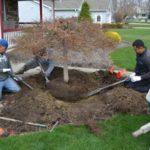Sposoby przesadzania drzew i krzewów